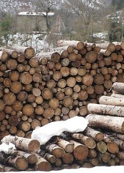 catasta di legname all'imposto. Foto Stefano Bassi