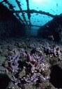 Immagine subacquea del SIC Paguro2