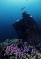 Immagine subacquea del SIC Paguro