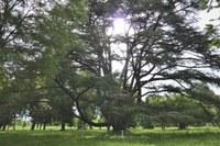 Alberi monumentali, 70 nuovi ingressi nell'elenco regionale: sale a 600 il patrimonio dell'Emilia-Romagna
