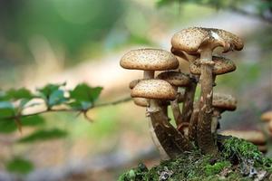 Alla scoperta dei funghi epigei nel Parco Delta del Po