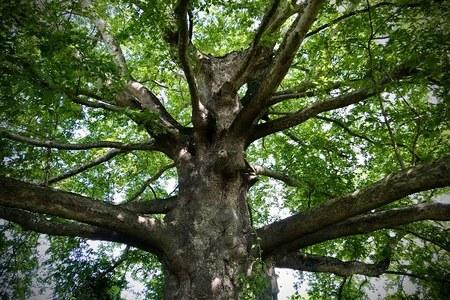 Avviso pubblico per i finanziamenti degli interventi conservativi e di salvaguardia degli alberi monumentali regionali e nazionali