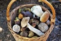 Indicazioni per la raccolta dei funghi in zona rossa in Emilia-Romagna