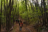L'Ente di gestione per i Parchi e la Biodiversità-Romagna organizza il Corso CAMMINA BOSCHI 2021