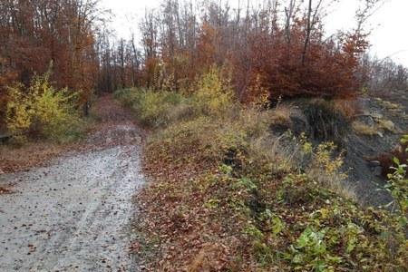 Montagna, in soccorso dei boschi danneggiati da calamità naturali: 1,3 milioni di euro per 13 interventi