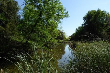 Parchi, il Piano nazionale di ripresa e resilienza premia il Parco del Delta del Po con 55 milioni di euro
