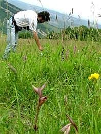 Rilievo floristico su habitat 6210. Foto Stefano Bassi, archivio personale