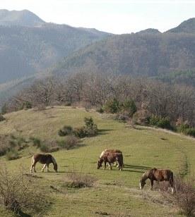 Cavalli su prateria periodicamente pascolata a gestione controllata. Foto Stefano Bassi