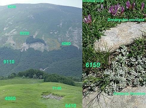 Mosaico di ambienti appenninici in alta quota (Monte Cusna): identificazione di habitat d'interesse comunitario e specie collegate. Foto Stefano Bassi