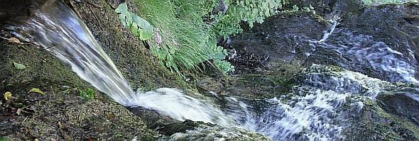 Corso d'acqua naturale in zona sorgentifera. Dintorni dell'Acquacheta. Foto Stefano Bassi, archivio personale