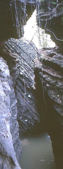 L'inaccessibile forra del Rio Albonello (RA). Foto Stefano Bassi, archivio personale