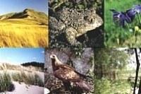 Specie e habitat d'interesse comunitario. Immagine archivio Servizio Parchi e Risorse forestali RER