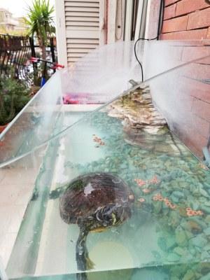 Foto: vaschetta per le tartarughe