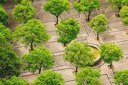 """""""Mettiamo radici per il futuro"""": già distribuiti quasi 260 mila alberi gratis in meno di 3 mesi"""
