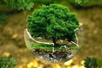 """""""Mettiamo radici per il futuro"""", in 40 giorni già distribuiti più di 180mila alberi gratis da piantare in Emilia-Romagna"""