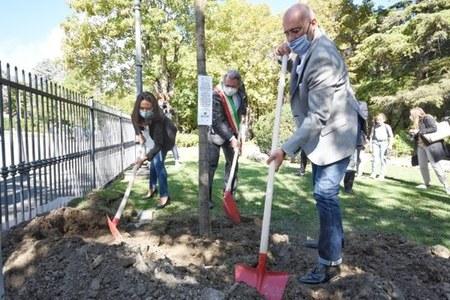 In Emilia-Romagna 4,5 milioni di nuovi alberi: dall'1^ ottobre via alla distribuzione gratis dei primi 500mila da piantare