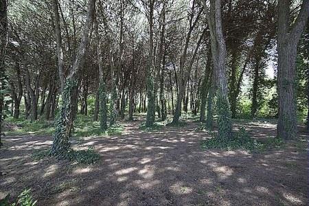 Forestazione urbana: 37 progetti e circa 1,8 milioni di euro per aumentare il verde pubblico in città
