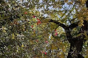 """""""Mettiamo radici per il futuro"""", l'Emilia-Romagna accelera: già messi a dimora 360 mila alberi"""