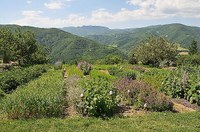 Mettiamo radici per il futuro, si allarga il corridoio verde dell'Emilia-Romagna. Oltre 580 mila piante distribuite gratuitamente in tutta la regione