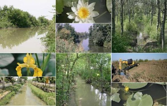 Riqualificazione fluviale
